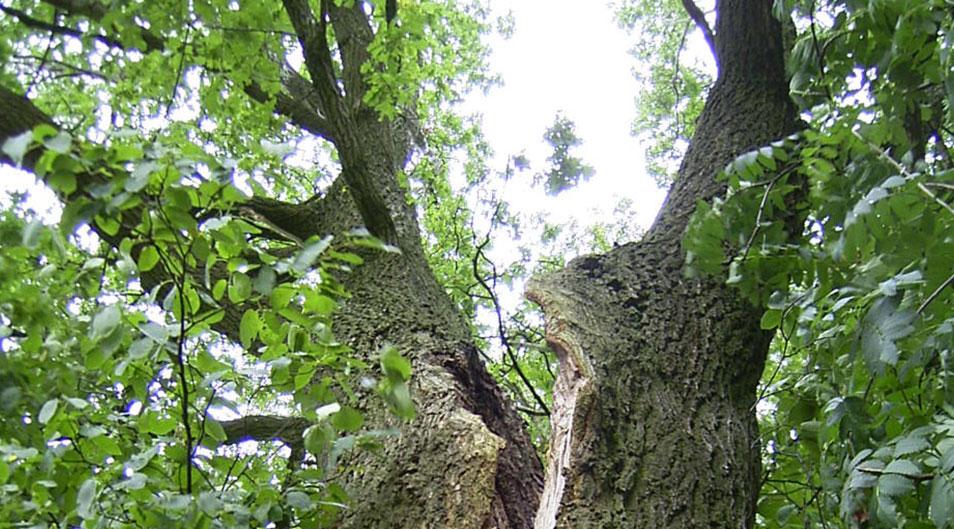 Expedio Arbori - Inventarisatie