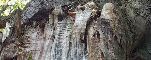 boomveiligheidscontrole-foto-2-klein